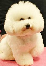 petit chien chien