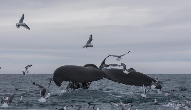 La fin des baleines photographiées du bateau... mais