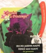 iris germanica 'Noir velouté'