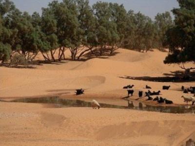 Troupeau d'élevage d'une famille nomades