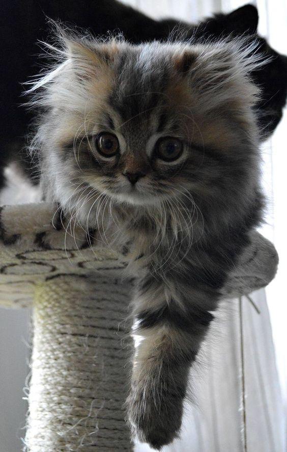 kitty: