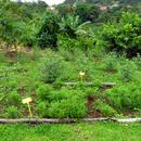 Le carré des plantes aromatiques et médicinales (1) - Photo : Fritz