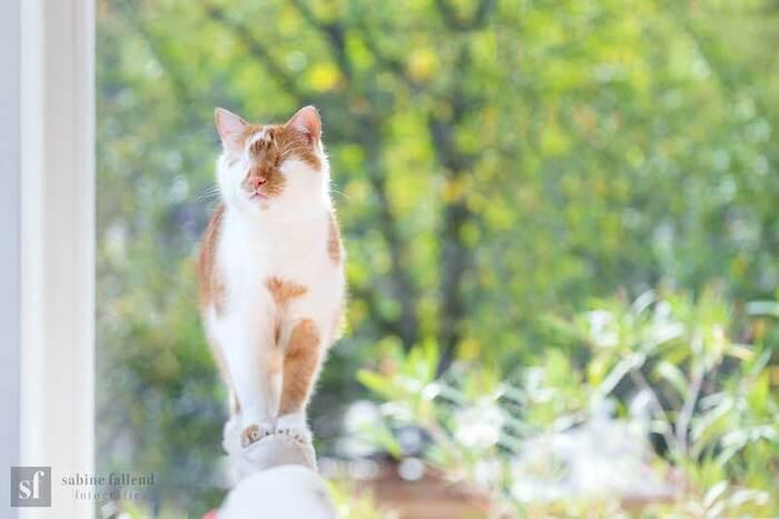 Kazou le Chat Aveugle qui Voit avec son Coeur