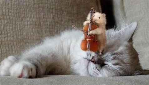 image-cocasse-violon.jpg