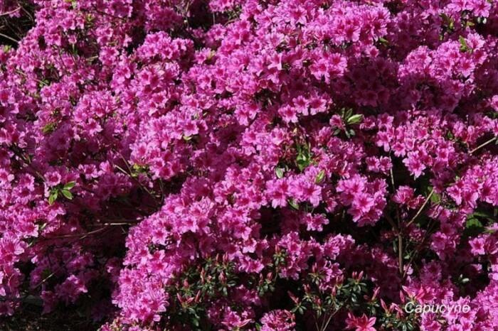 Parc de la gaudinière, 27 avril 2012 (18)