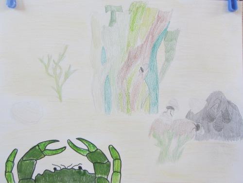 Catégorie Charles Thorndike (11 ans et plus)