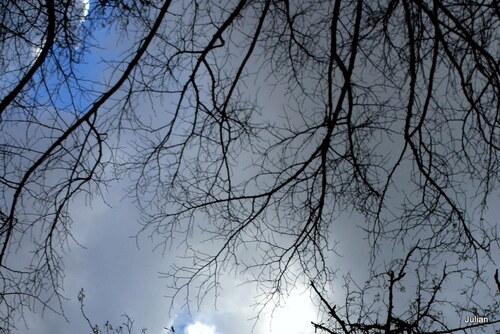 Des arbres : sans les feuilles !