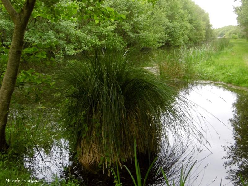 """Ma balade au Lac """"post confinement"""" (suite)..."""