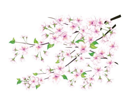 Fleurs et Accessoires