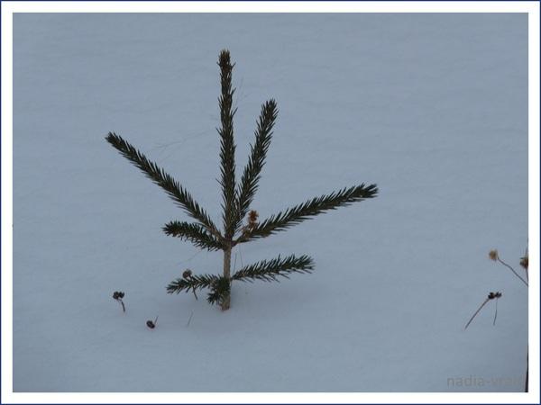 Paysages d'hiver.(pour Instant T)