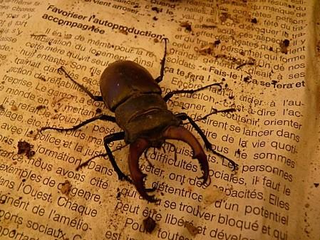 scarabé 02