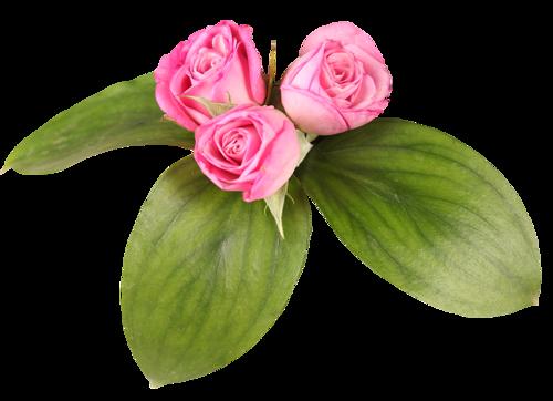 Fleurs Têtes Série 9