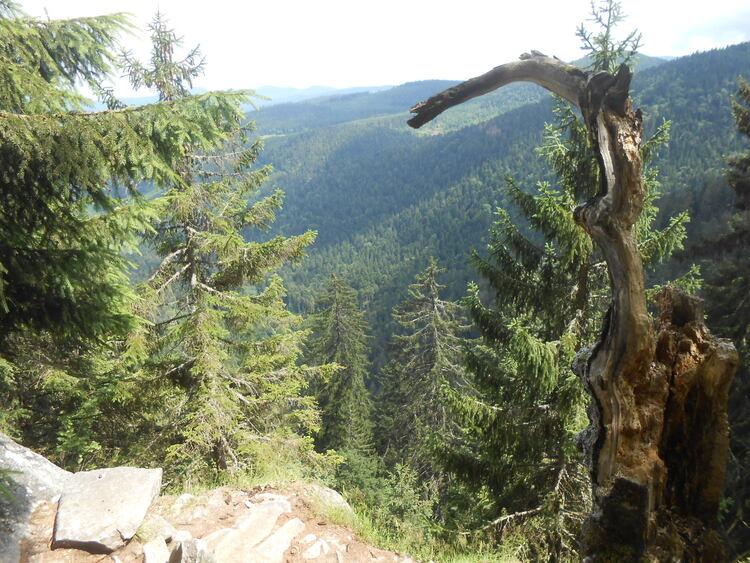 Vosges- le sentier des roches