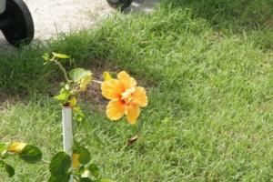 Tival-mai 074