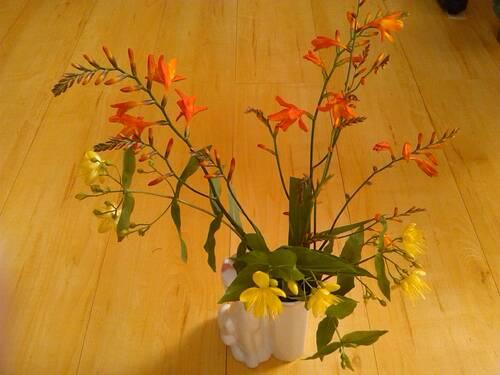 mon hortensia cette année