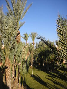 Marrakech_Hotel_Decameron_issil_ressort__8_