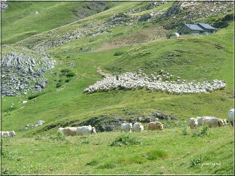 Pyrénées, la vallée d'Ossau : le col de Peyrelure