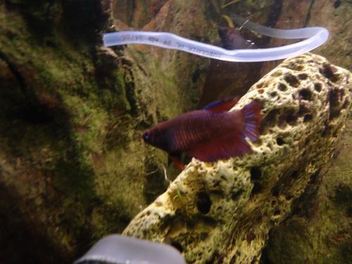 Aquarium de 115l