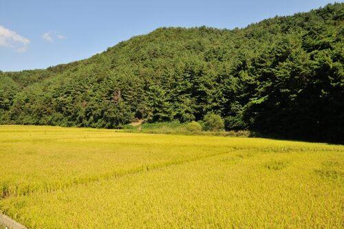 19 septembre - Gampo Guryongpo et Ganggu
