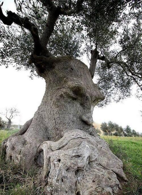 L'arbre de la pensée