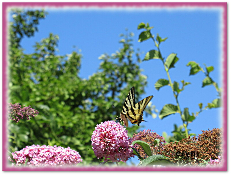 Papillon vole, libellule vole !!