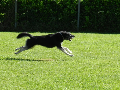 La photo du week-end : I believe I can fly ...