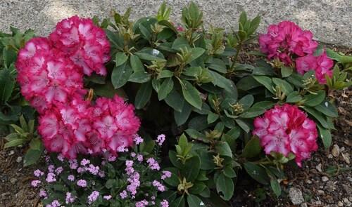 Fleurs de printemps (suite)...