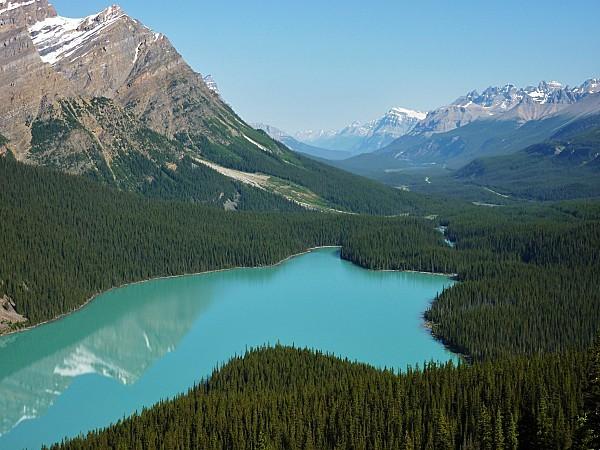 Jour 19 route des Glaciers lac Peyto tête loup