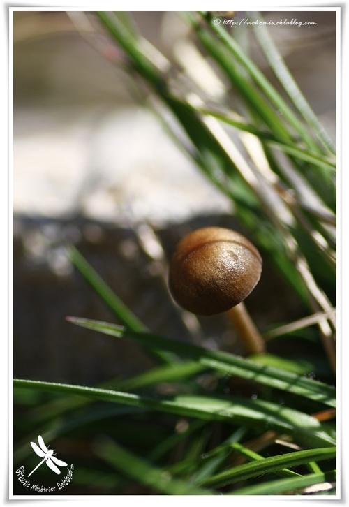 Petit champignon d'avril