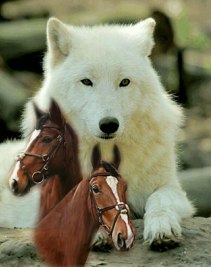 Photo de Wolves and wolfpuppys.