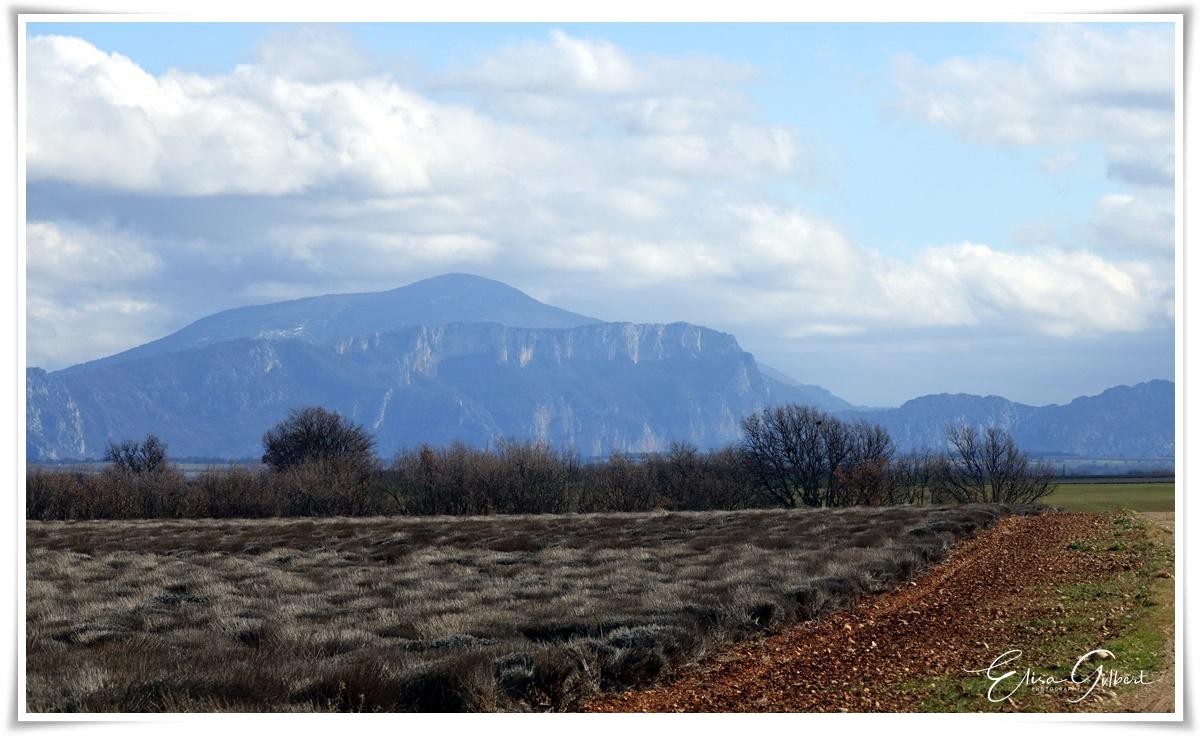 L'hiver sur le Plateau de Valensole
