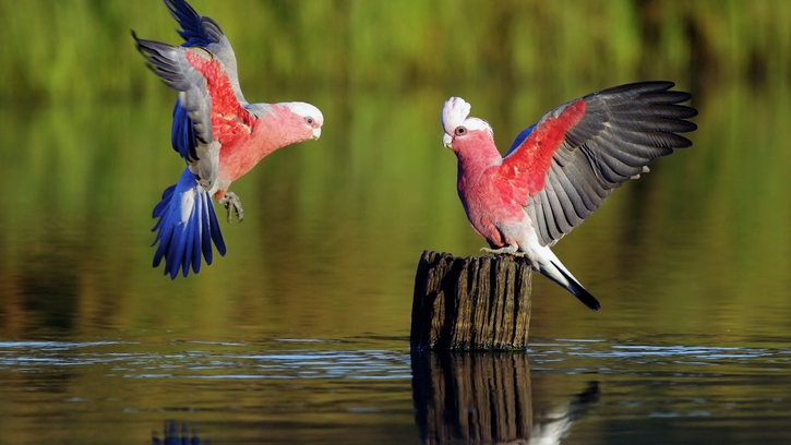 15 images d'Oiseaux