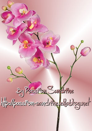 Passion Sandrine - Tube 00005