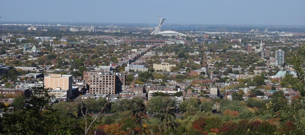 Montréal : les ratons-laveurs du Mont-Royal...