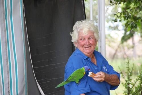 perroquets-vert-Clairview--14-.jpg