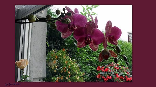 2012-09-11-rideaux-digoin---winnie-l-ourson2.jpg