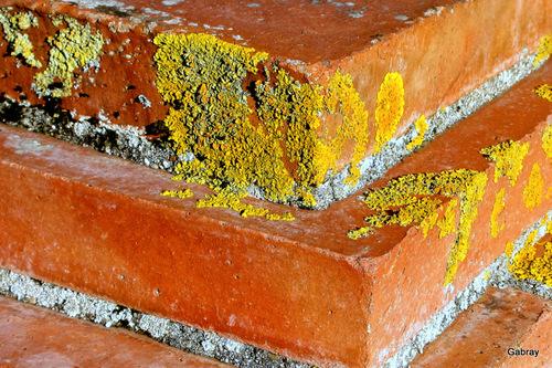 Des lichens sur un mur ...