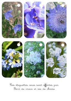 Cartonnettes fleurs bleues