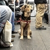 chien-guide-aveugle-metro-09.jpg