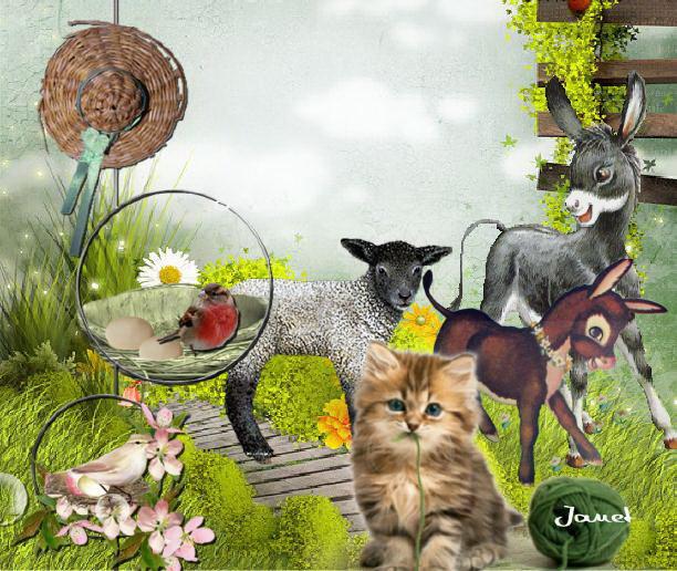 vos créations3 : naissance chez les animaux