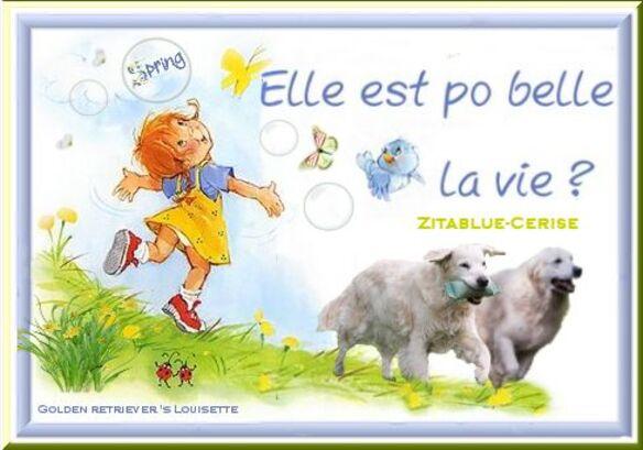 louisette, golden retriever, spring, lente,printemps,blogs,cerise, zitablue,