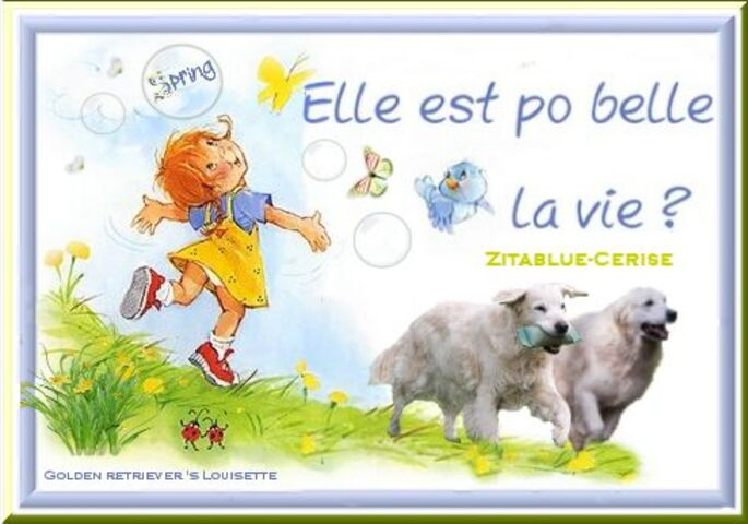 louisette, golden retriever, spring, lente,printemps,blogs,cerise, zitablue,