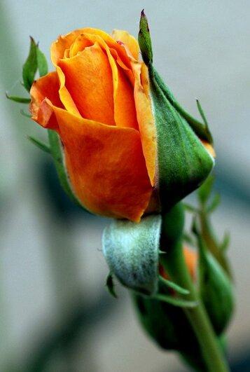 Composition d'une fleur
