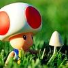 Toad et le champignon