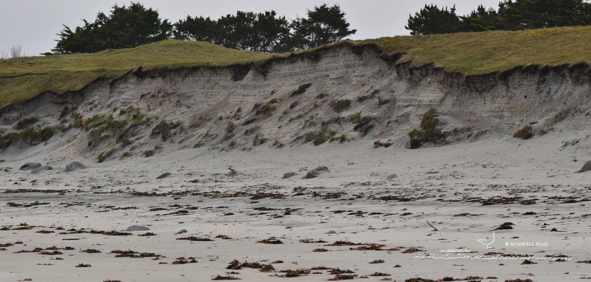 339 - Régression d'une dune