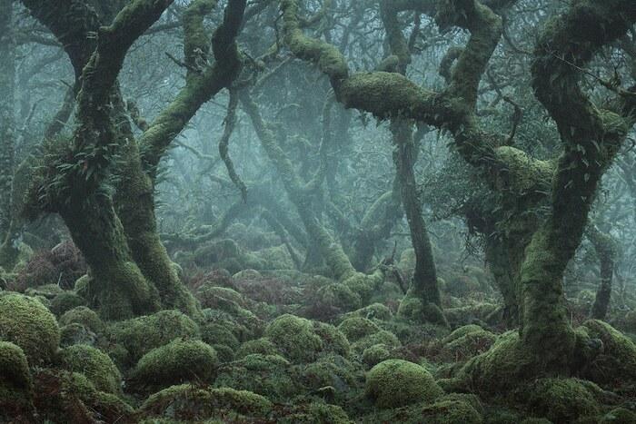 Photos mystiques des enchanteresses forêts anglaises de Wistman's Wood