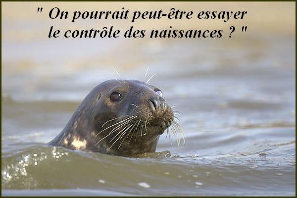 La guerre des phoques
