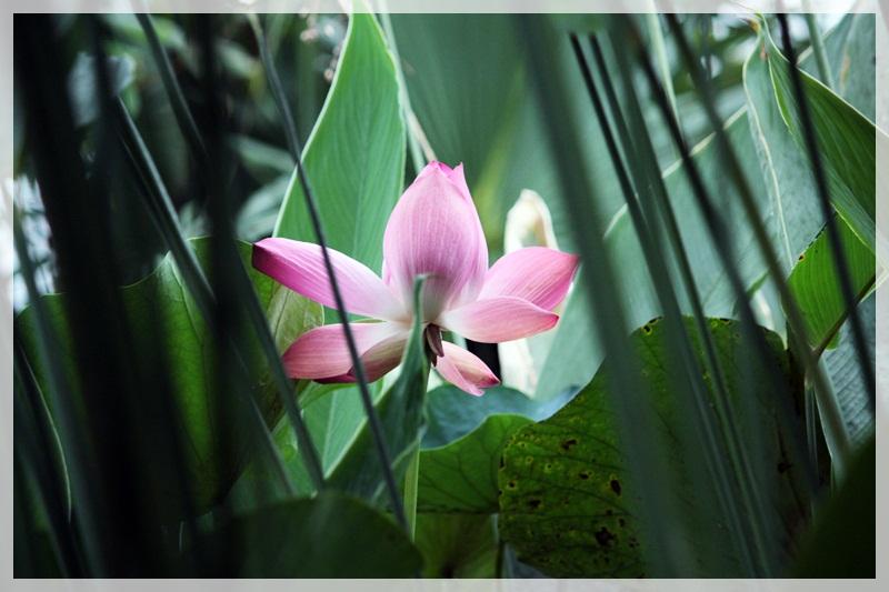 Jardin Botanique de Meise...