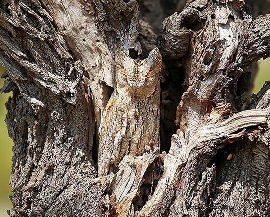 camouflage-de-hiboux12