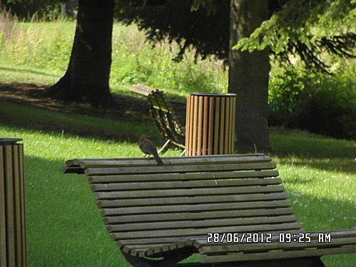 oiseaux-papillon-et-bicyclette-004.JPG